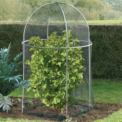 fruit tree cage domed roof fruit cage agriframes