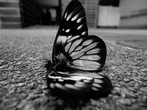 black and white butterfly wallpaper black butterfly wallpapers wallpaper cave