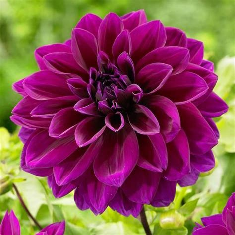 Anting Flower Petals Violet Soft Purple 62 best purple flowers images on purple
