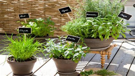 planter des herbes aromatiques en pot sur un balcon