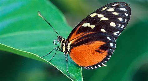 imagenes mariposas para uñas 10 curiosidades sobre la vista y tus ojos las mejores