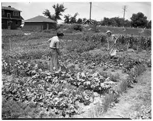 working on a victory garden july 1943 news