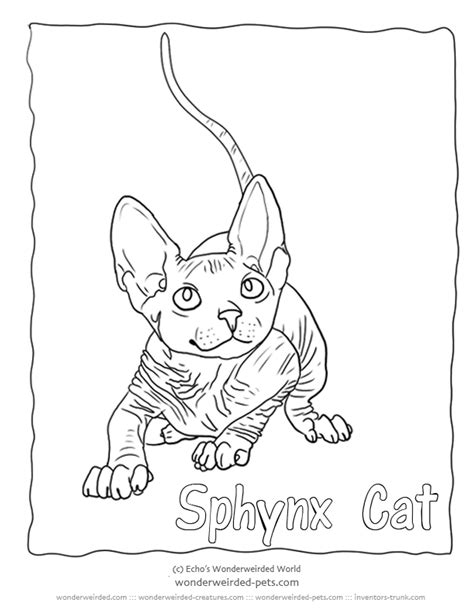 sphynx cat coloring page sketch coloring page