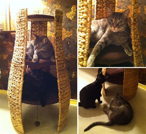 catit design home 3 story hideaway cat climber singapore my adopted cat is the best climbing