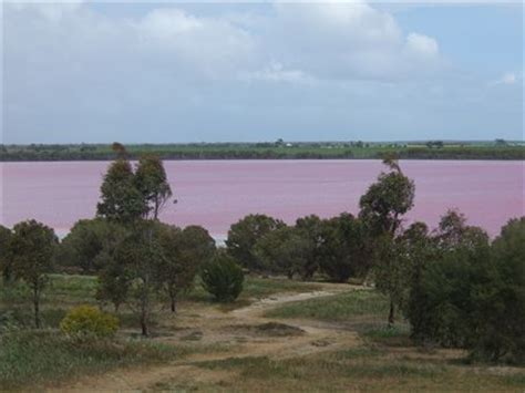 pink lake melbourne pink lake somewhere between adelaide and melbourne