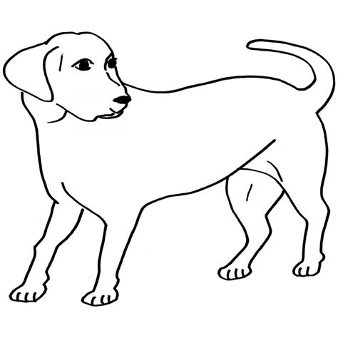 labrador coloring pages 34 labrador coloring pages coloriage labrador retriever