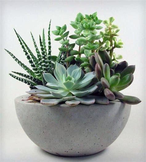 succulent arrangements best 25 succulents ideas on pinterest succulents garden