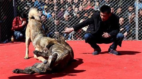 film sui misteri del vaticano cina cani costretti a combattere fino alla morte foto