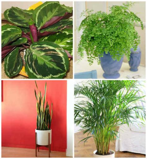 17 plants that grow well indoors without sunlight 17 plants that grow without sunlight iseeidoimake