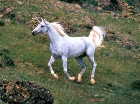 imágenes de unicornios verdaderos unicorn the horned horse mystery files