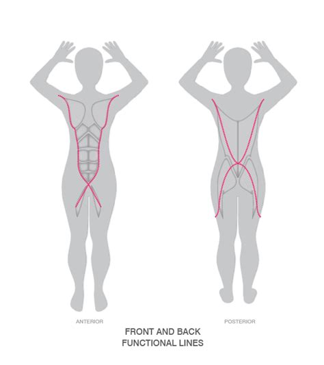 why back pain after c section painful c section scar diastasis and adductor inner
