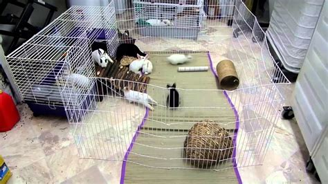 How To Set Up A Rabbit Hutch rescued rabbit and baby rabbits cage set up