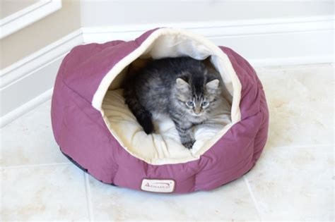 enclosed dog bed sleepers and hideouts products ferret sleepers and