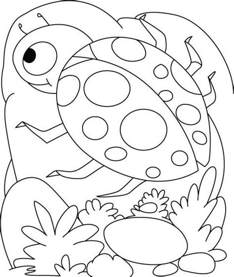 coloring pages of ladybug printable ladybug coloring pages coloring home