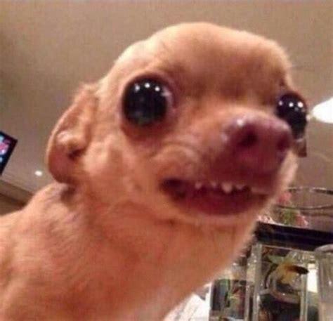 Puppy Face Meme - best 25 reaction pictures ideas on pinterest reaction