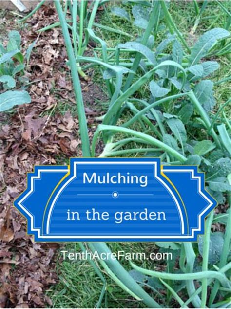 garden mulch types mulching in the garden why mulch types of mulch and how