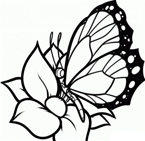 coloring pages of butterflies and flowers free printable butterfly coloring pages for kids