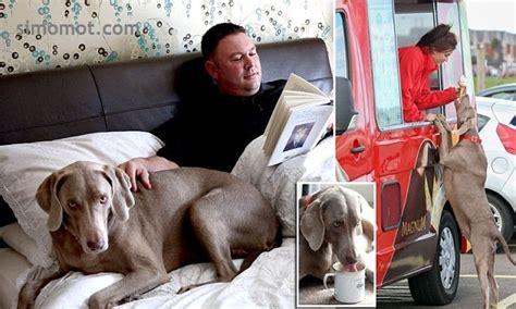 dari penjual es krim sai menjadi ibu rumah tangga anjing paling manja sedunia sarapan sugar puffs minum
