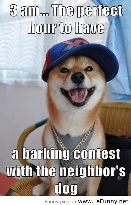 images  funny dogs  pinterest dog humor cartoon  technology
