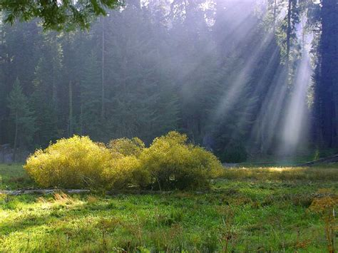 sunbeam meadow background image wallpaper or texture free for any web page desktop phone or blog