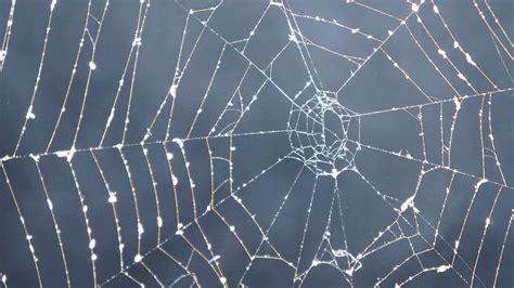 Free photo: Cobweb, Dark, Smoke, Mystical   Free Image on