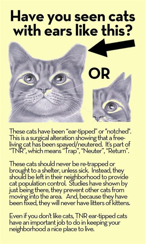 face low cost spay neuter clinicear tip identifying