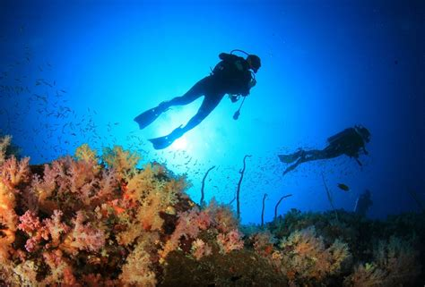 thailand scuba diving courses real gap experience