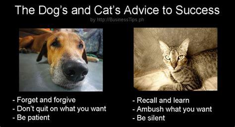Success Cat Meme - 5 interesting memes for work success and fun business