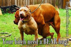 Than just a big pit bull he s the most extreme xl bully in the world