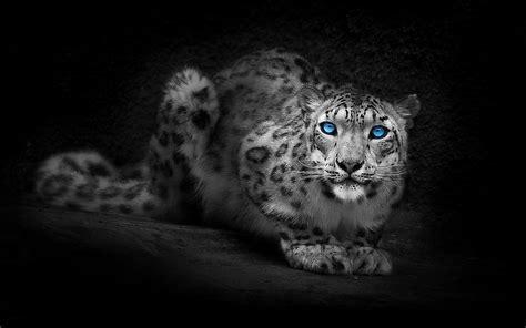 imagenes para fondo de pantalla leopardos wallpapers leopardos hd im 225 genes taringa