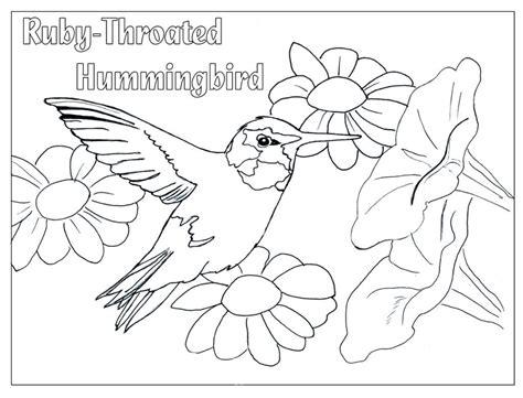 hummingbird coloring page humming bird coloring page coloring home