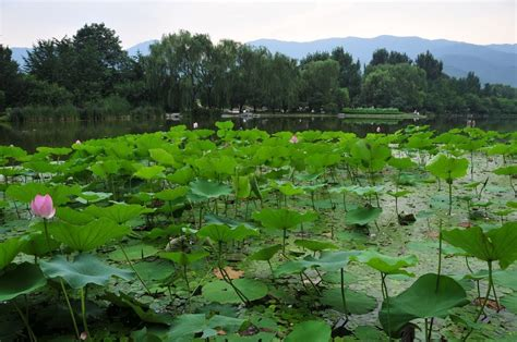 Botanical Garden China Image From Beijing Botanical Garden China