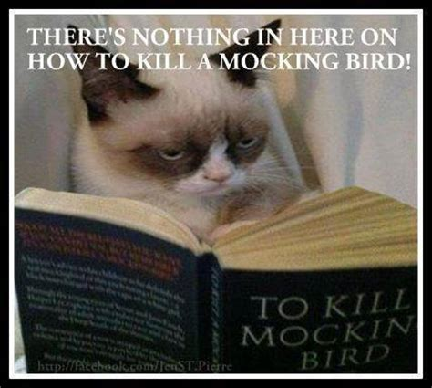 To Kill A Mockingbird Cat Meme - 10 new grumpy cat memes