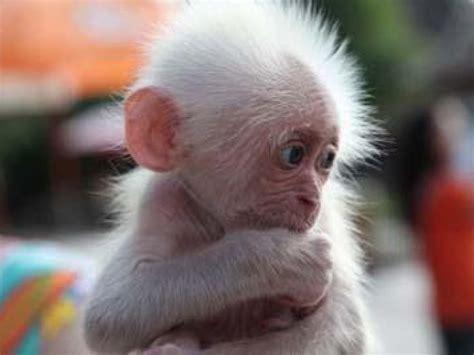 Cute Baby Monkeys Wallpaper   www.pixshark.com   Images
