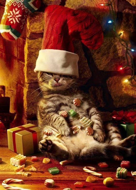 catnip   merry christmas cat christmas cards cute cats cats