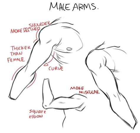 how to draw muscles arms drawing tutorial helpful drawings