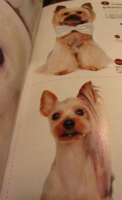 japanese style grooming yorkie 30 best images about yorkie grooming on purpose yorkie and wedding dogs
