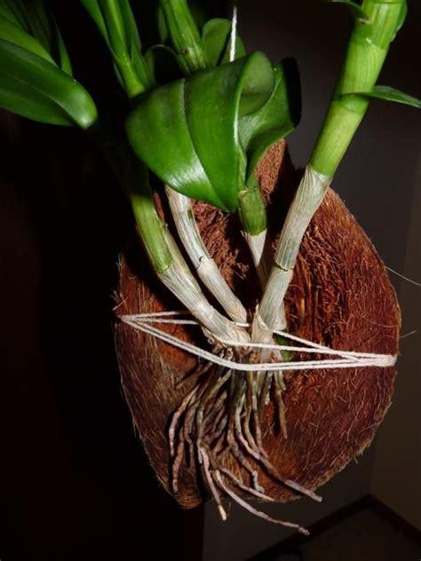 images  orchid plants  care  pinterest