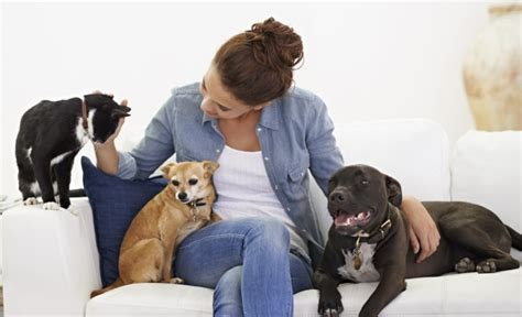 dog sitter jobs pet sitting is it right for your dog australian dog lover