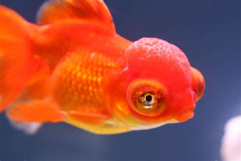 fish can recognize your face really nbc news