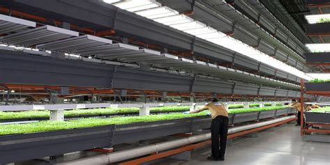 indoor farming led lights why vertical farming could be on the verge of a revolution