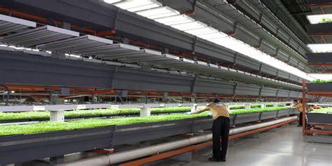 vertical farming     verge   revolution