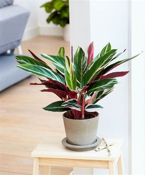 t d c interior styling indoor plants 104 best guides beginner images on pinterest