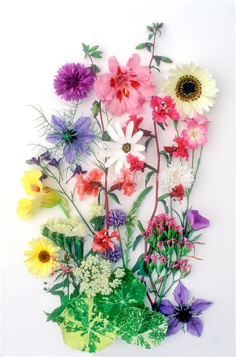 google images flower arrangements flower arrangements google search art flower