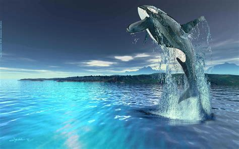 Killer Whale Wallpaper killer whales wallpapers animals wiki