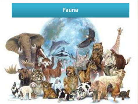 la fauna pictures la fauna en la republica dominicana