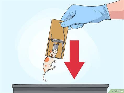 come catturare un topo in cucina come catturare un topo 18 passaggi illustrato