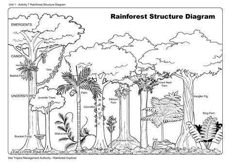 Rainforest Layers Coloring Pages