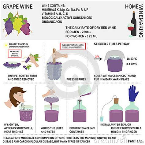 home wine wine from grapes infographics stock