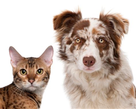 when should puppies get rabies rabies vaccination is the according to marietta vet clinic